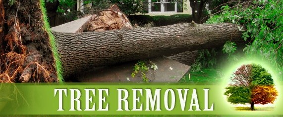 emergency tree removal service Duluth