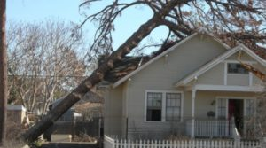 local emergency tree company alpharetta